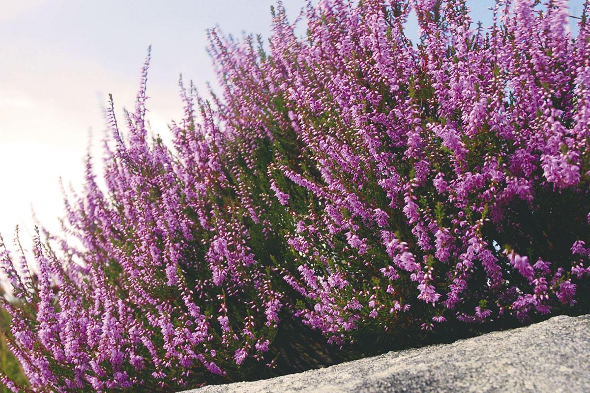 Ausflugsziel Loosbühelalm, Großarl, Frühlingsblumen